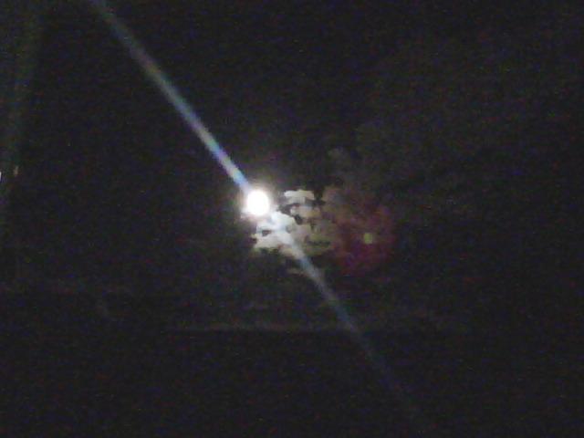 綺麗な月だ